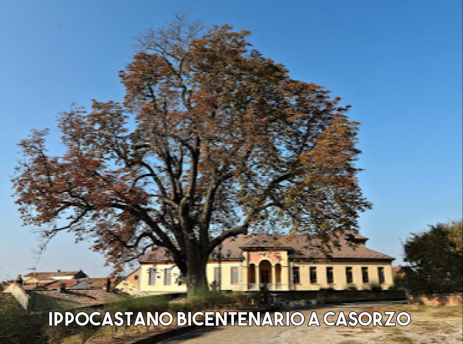 ippocasatanobicentenariocasorzo-1629885799.png